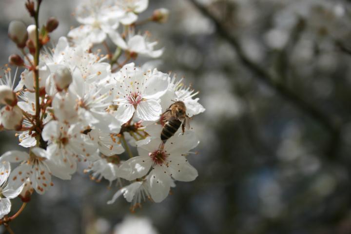Blüten für Bienen