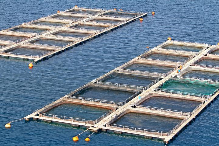 Bienenprodukte in der Aquakultur