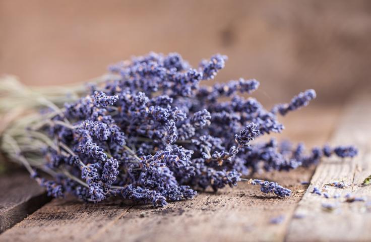 Lavendel liefert ätherische Öle