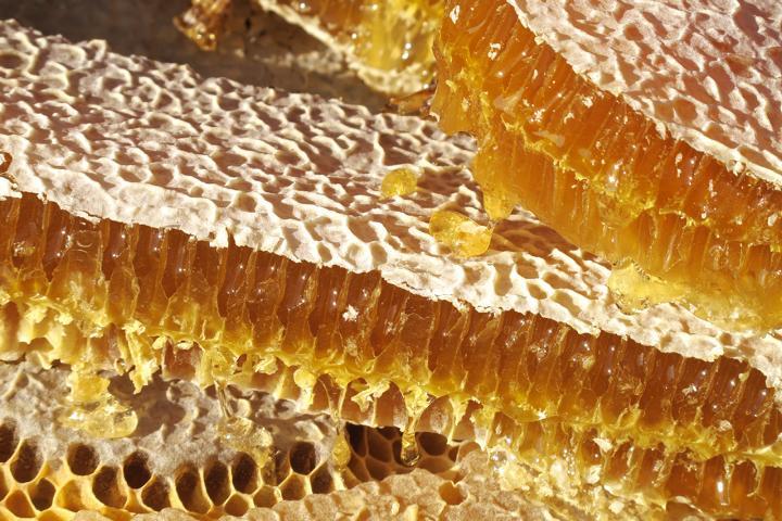 Ökologische Bienenpflege