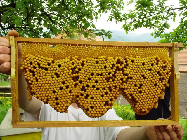 rohnenbau, Varroabekämpfung