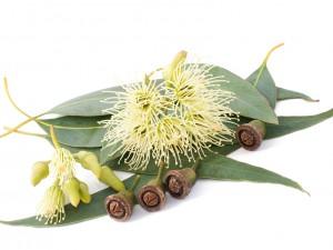 Bio Eucalyptus Honig, Bild bigstock, Foto Scis65
