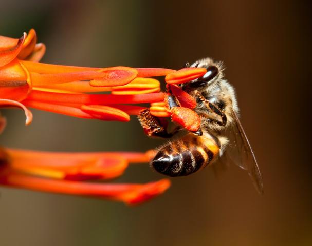 Bienengift für die Haut