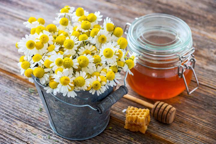 Hautpflege, Lippenpflege mit Honig, Kamille und Bienenwachs