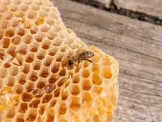 Wachskreislauf für gesunde Bienen und guten Honig