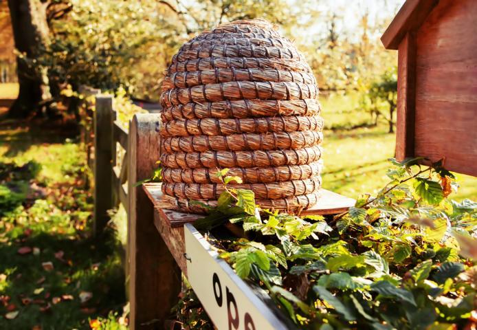 Biologische Erzeugung von Propolis, Honig und Bienenwachs