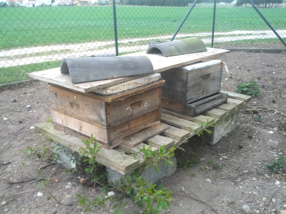 Bienenvölker ohne Varroabehandlung