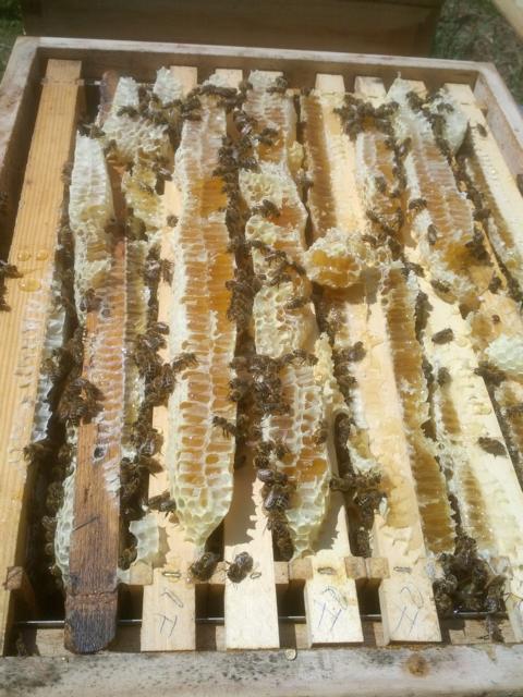 Waben voller Honig, 2014 selten