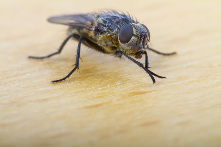 Honig zum Fliegenfangen