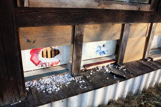 Spechtbesuch Gefahr für Bienen