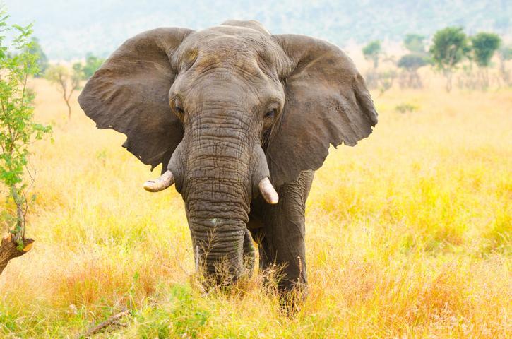 Bienen als schutz gegen Elefanten