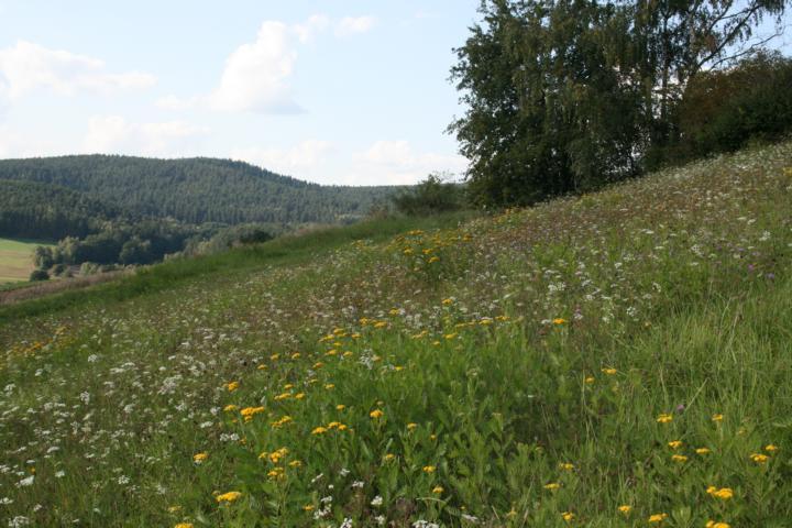 Bienenweide-Propolis-Honig.de