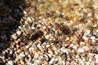 Bienen, Hitzewelle, Kühlung, eigene Klimaanlage, Binenstock kühlen, Bienen im Sommer