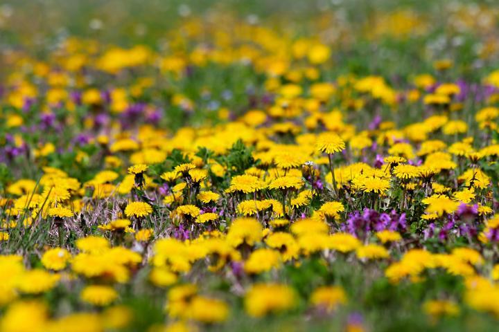 Bienenweide, Bienenoase, Bienen, Schmetterlinge, Heilpflanzen