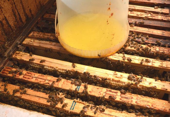 Imkern im Herbst - langsam kehrt Ruhe ein im Bienenstock