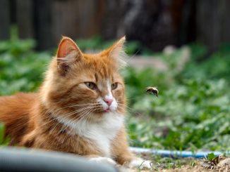 Haustiere und Insektenstiche - nicht zu unterschätzen