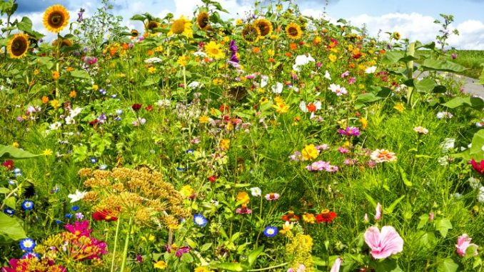 Volksbegehren Artenvielfalt