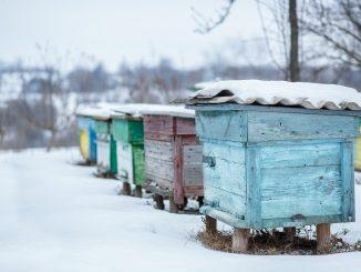 Schnee auf einem Bienenstock